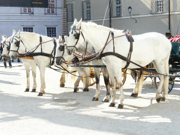 horses-116890_1920